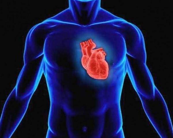 1-serce
